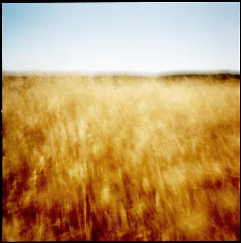 120 film field grass wind kodak pinhole marincounty pointreyes portra 160nc