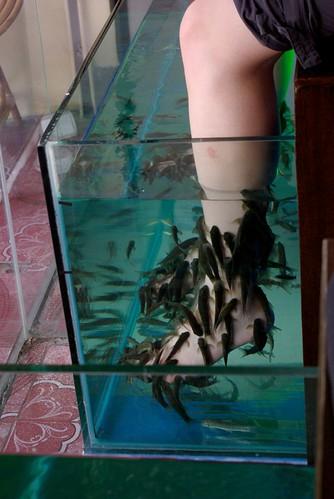 March 2010 worldwidewatercooler for Fish eat dead skin spa