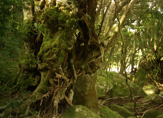 Tree and moss in forest. 600dpi