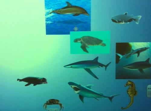 Sea creatures 4
