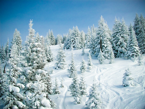 trees winter snow ski mountains landscape landscapes colorado skiing sunny bluesky clear vail pointandshoot skis vailresorts december2007