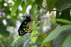 Butterfly World and Everglades