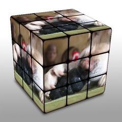 glass(0.0), lighting(0.0), rubik's cube(1.0), games(1.0), toy(1.0),