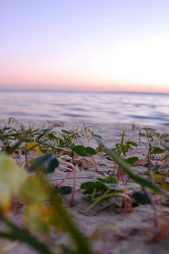 sunset bird water bay gulf florida crane pensacola