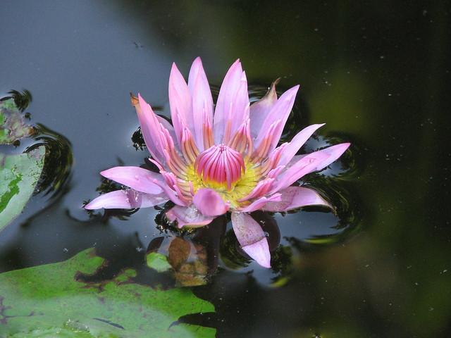 Jardin botanico xmuch haltun explore rosswebsdale 39 s for Jardin botanico xmuch haltun