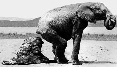 Elephant Shit