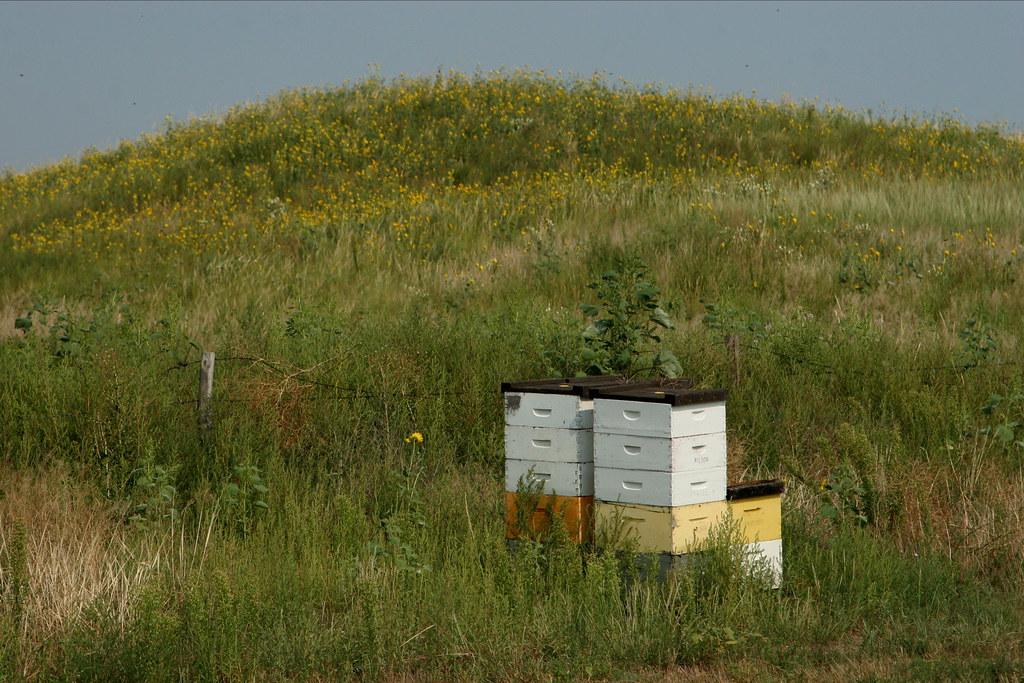Nebraska Bees