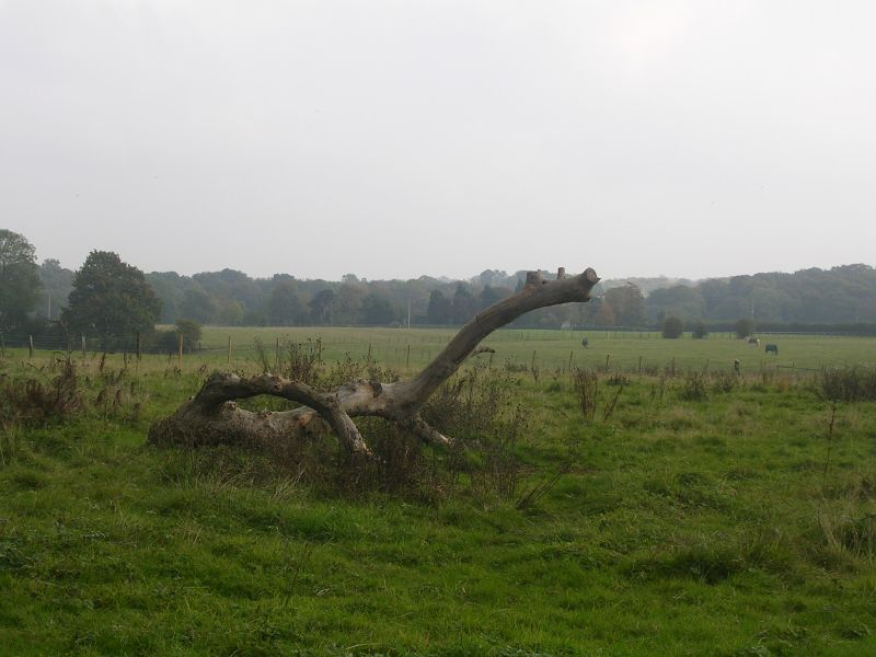 log monster Knockholt circular