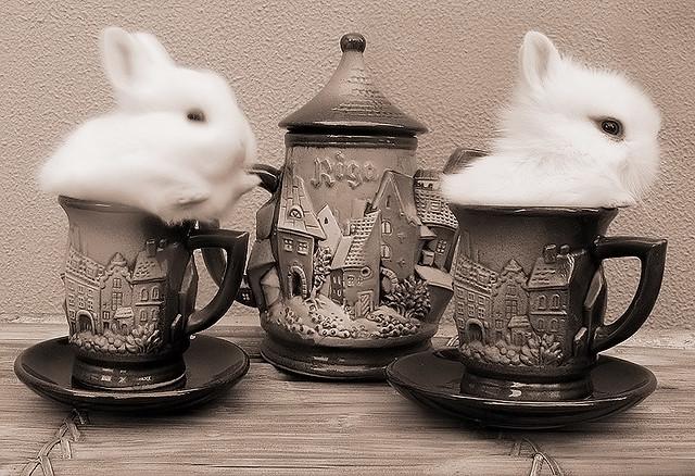 Shaked Milk & Rabbit Tea