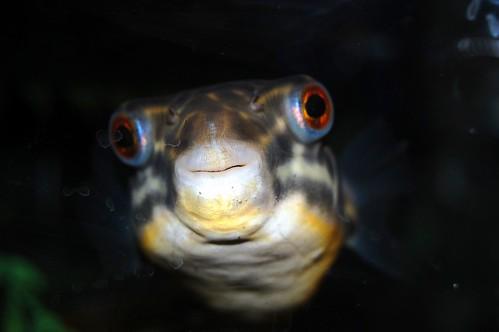 Freshwater Fish Flickr Photo Sharing