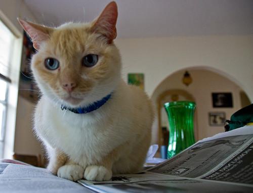 Cat sitting on a newspaper