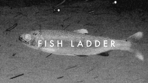 FISH LADDER