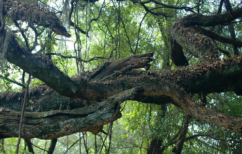viewlarge lachuatrail paynesprairie naturesart birthdaytreat ancientones onthepath armsextended entrancetolachuatrail beautyandartinnature