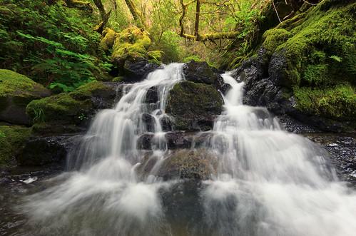 longexposure morning green waterfall moss cool ferns cascade redwoodforest sigma1020mmf456exdchsm bwkaesemanncircularpolarizer nikond7000