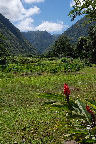 Rob Lee's photo of the Waipio Valley floor.