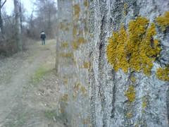 makro tree with SE