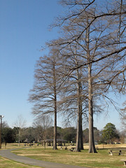 Betty Virginia Park