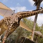 San Diego Zoo 068