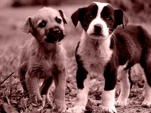 Zoonoses de cães e gatos: identificando esses perigos - PetLove