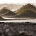 Iceland - Stokksnes/Vestrahorn - marram grass [Explored 18-1-2017] by Henk Verheyen
