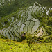 Terrace rice fields, Yunnan, China by Eric Lafforgue