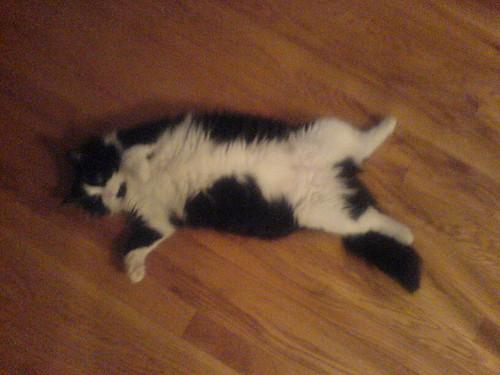 Fuzzy cat belly!