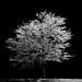 Ice Tree by leesure