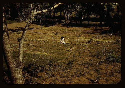 Woman in her garden, Virgin Islands?  (LOC)