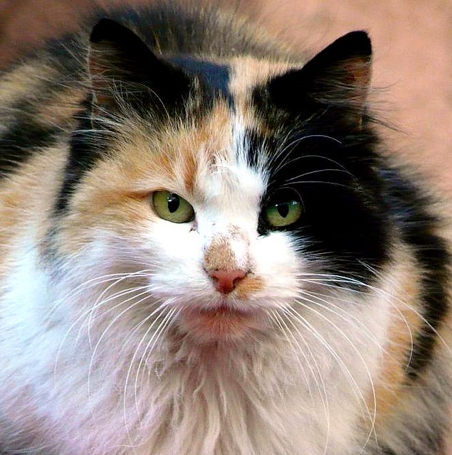 Chat rencontres serieuses
