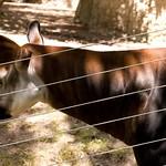 San Diego Zoo 021