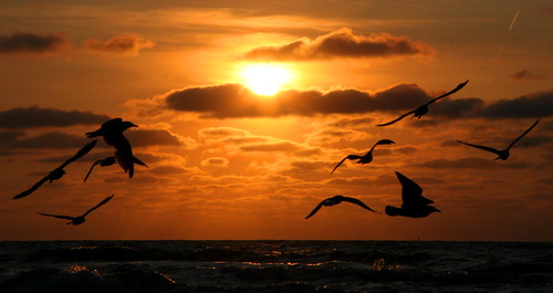 ocean blue light sunset shadow sea sky sun black tree bird beach nature water silhouette clouds sunrise landscape flying scheveningen seagull flight abigfave anawesomeshot goldstaraward keesstraver