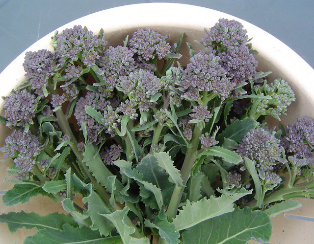 Tendrils: Broccoli spears