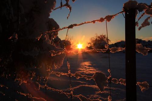 reveley somerslea 0views canon eos 40d canoneos canon40d eos40d canoneos40d newzealand nz southisland canterbury canterburynz mtsomers mountsomers snow landscape dawn sunrise fence winter june mareeareveley mareeareveleyphotography