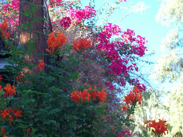 Native az plants beautiful color flickr photo sharing - Flowers native to greece a sea of color ...