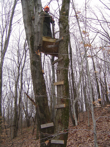 Kevin's Tree Stand