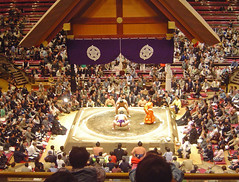 sumo, sports, wrestling, audience,
