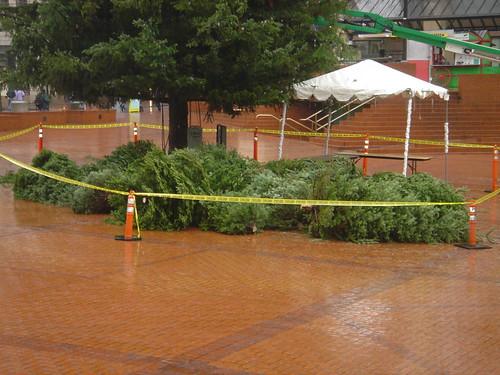 Portland Christmas Tree, Pioneer Courthouse Square