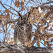 Great Horned Owl by Michele Weisz