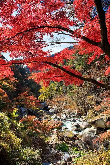 生鮮的紅葉