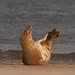 Seals_031 by RugbyRich
