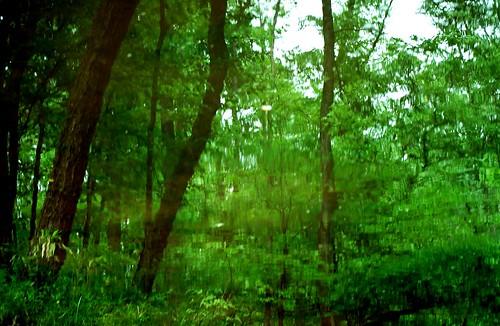 reflection water creek georgia upsidedown waltoncounty nikond40x treesdiestandingup bigflatcreek