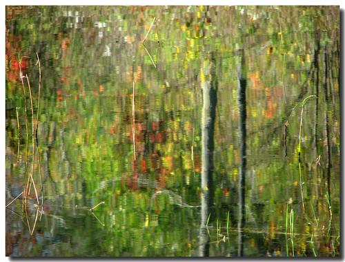 ontario canada reflection green lisas provincialpark allrightsreserved forksofthecredit caledon 2680 platinumphoto copyrightlisastokes