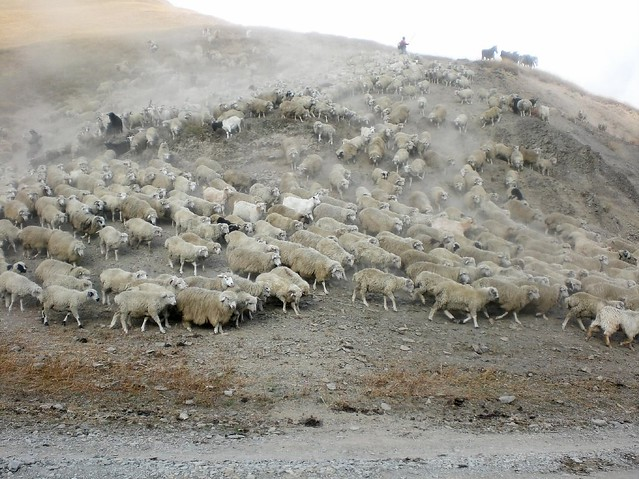 Cattle Drive Tusheti 2007