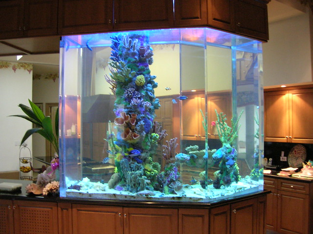 20 gallon aquarium 800 large home aquarium cypress inn for 20 gallon saltwater fish tank