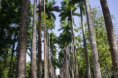 Jardín botanico de Rio de Janeiro