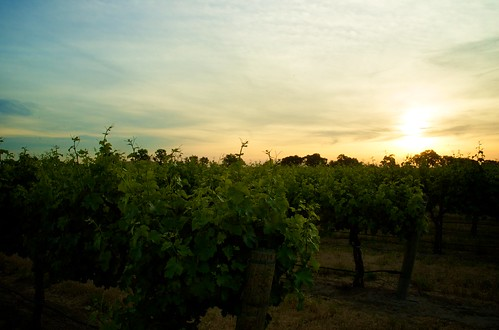 sunrise landscape vineyard frenchcamprd
