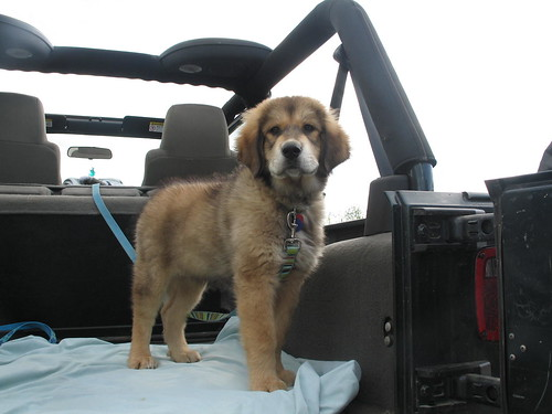 Jeep Dog by tundrasusie