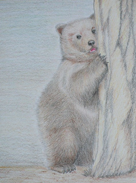 Grizzly Bear Cub - Color pencil drawing | Flickr - Photo ...