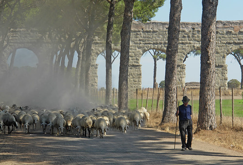 Aqueduct and Sheep in Rome