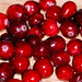 Cranberry - Photo (c) Carl E Lewis, some rights reserved (CC BY)